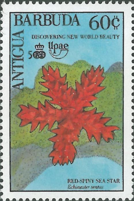 Echinaster (Othilia) sentus