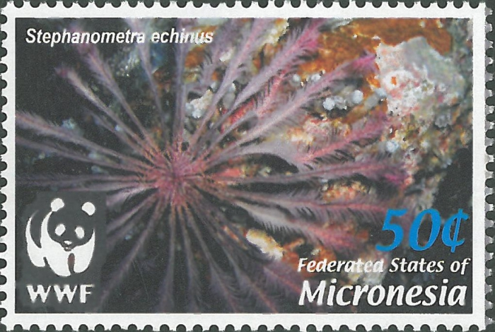 Stephanometra tenuipinna