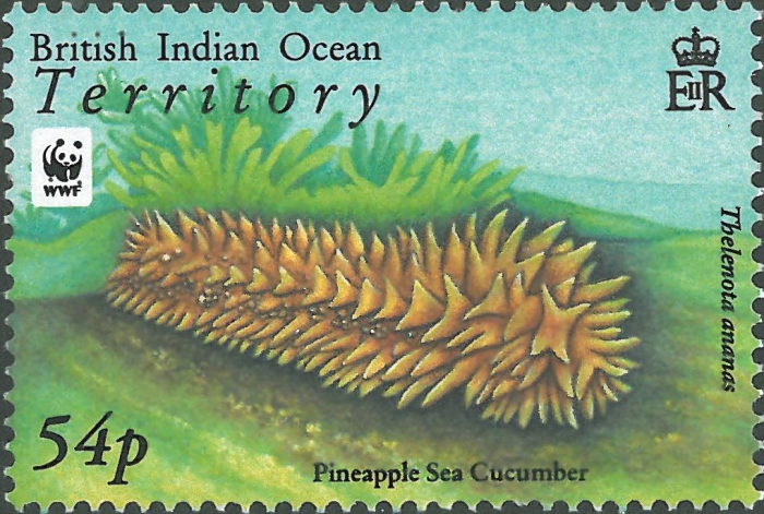 Thelenota ananas
