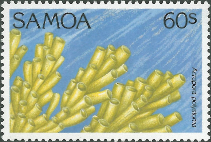 Acropora polystoma