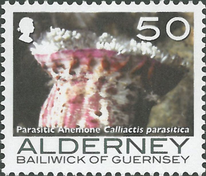 Calliactis parasitica