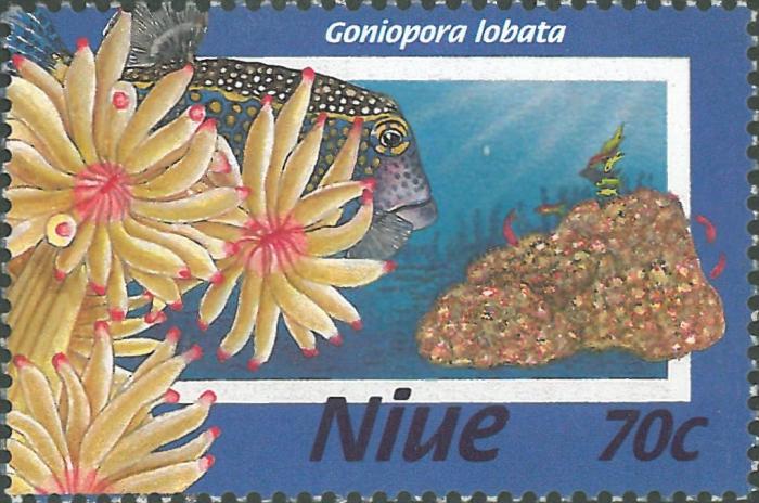 Goniopora lobata