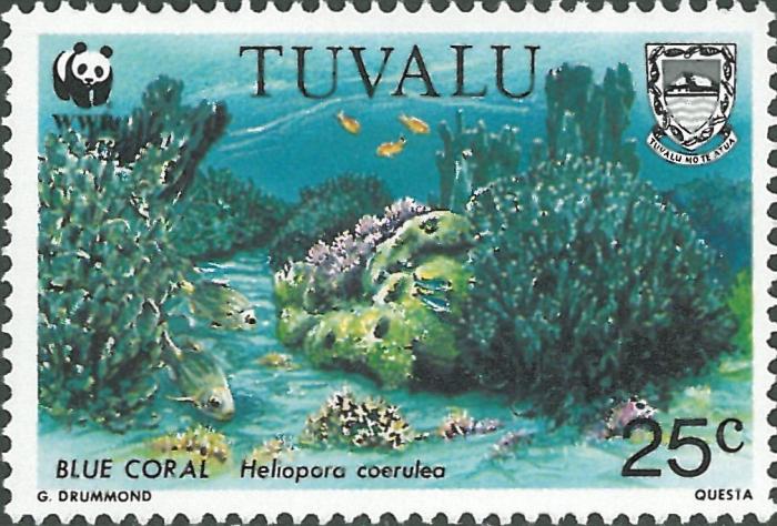 Heliopora coerulea