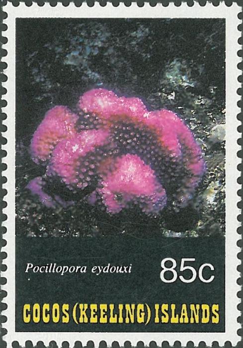 Pocillopora eydouxi