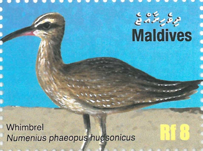 Numenius phaeopus