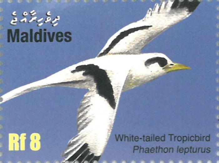 Phaethon lepturus
