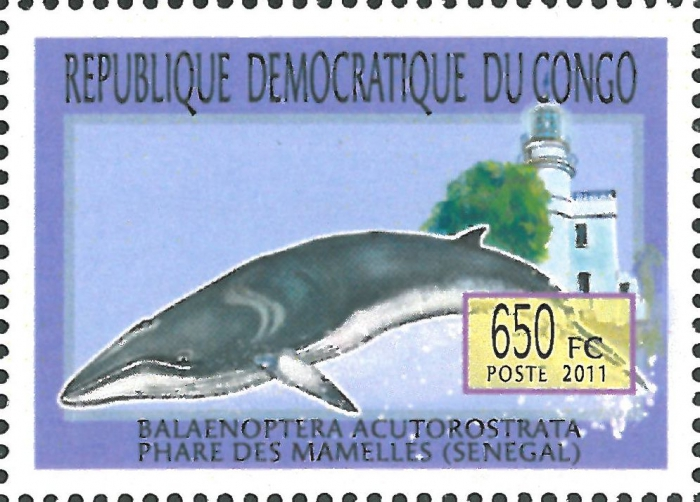 Balaenoptera acutorostrata