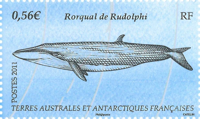 Balaenoptera borealis