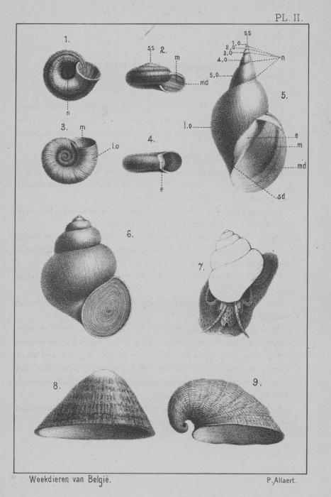 Eben (1884, plaat 2)