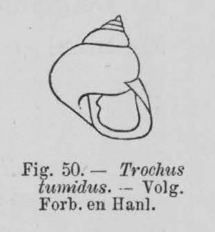 Eben (1884, figuur 50)
