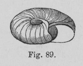Eben (1884, figuur 89)