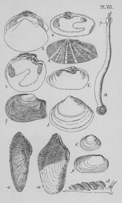 Eben (1884, plaat 7)