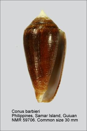 Conus barbieri