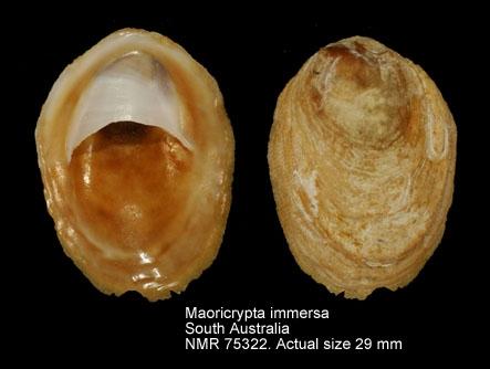 Maoricrypta immersa