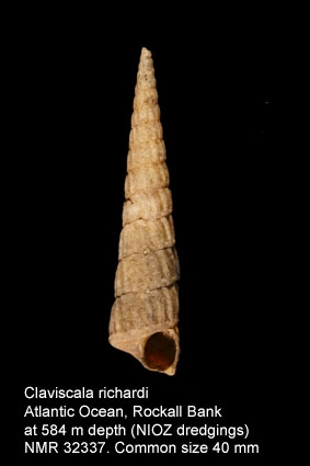 Claviscala richardi