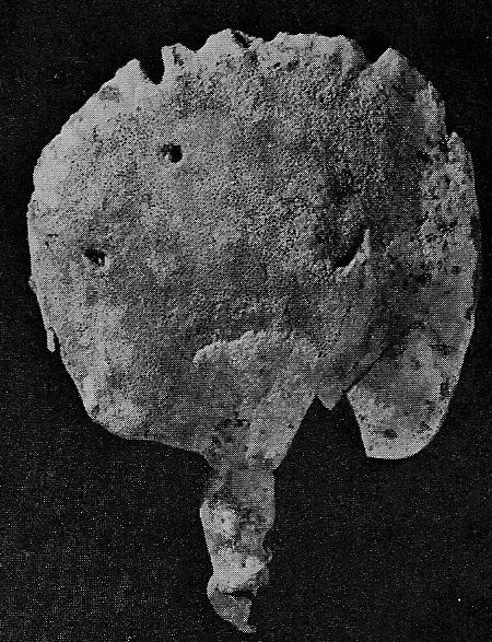 Coscinoderma lanuginosum Carter, 1883