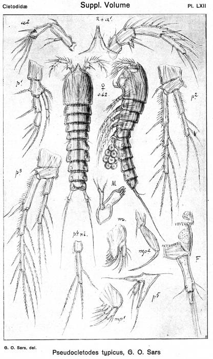 Pseudocletodes typicus from Sars, G.O. 1920