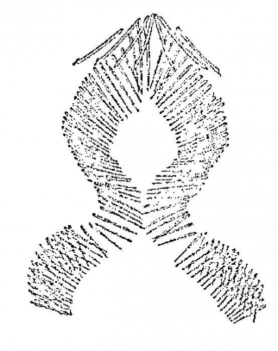 Bothriomolus balticus