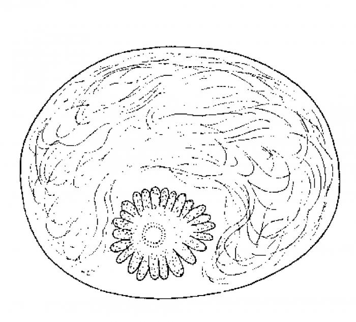 Monocelis galapagoensis