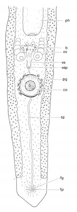Pseudomonocelis pardii