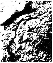 Nematoplana caribbea