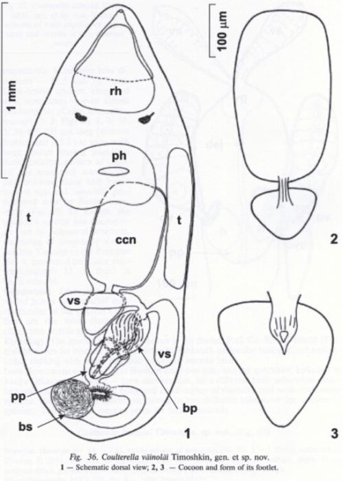 Coulterella vainolae