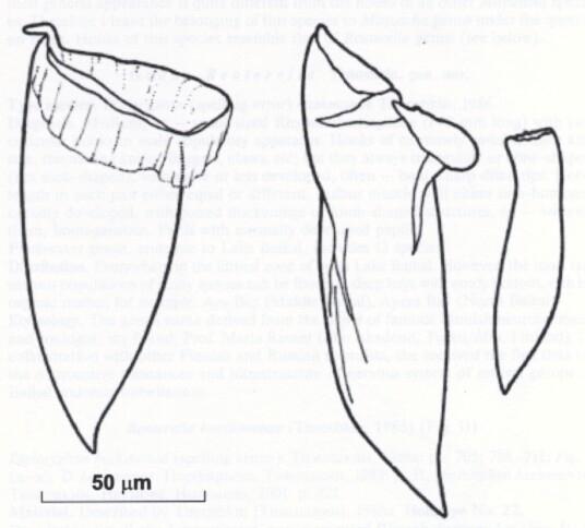 Mityuscha galinae