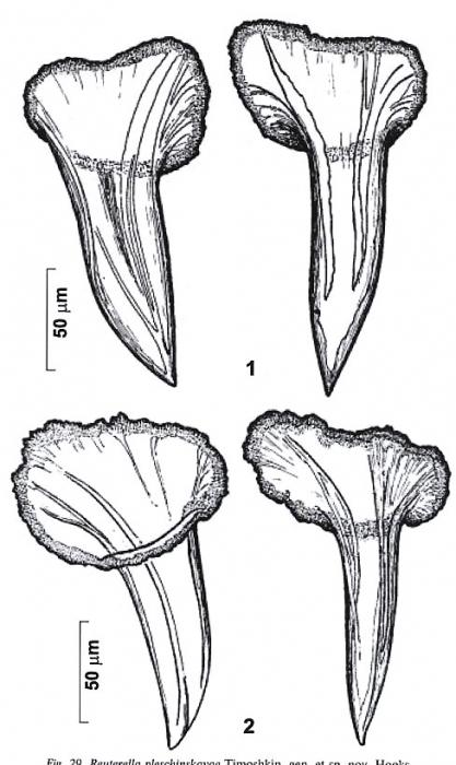 Reuterella pleschinskayae
