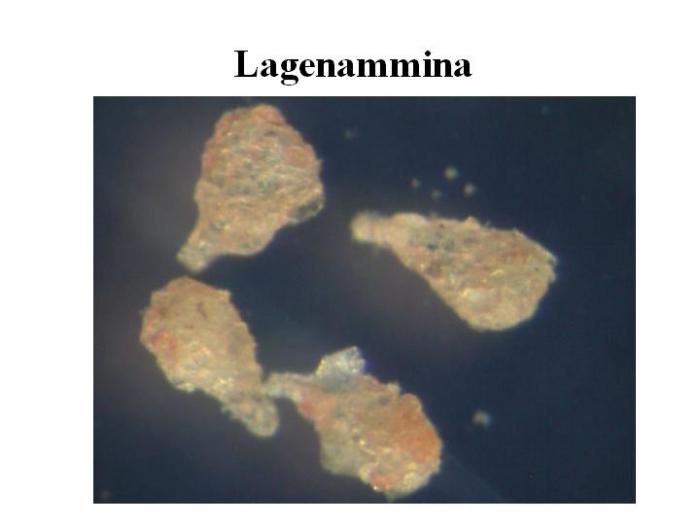 Lagenammina