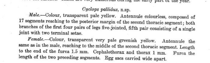 Cyclops pallidus Breinl, 1911 nomen nudum