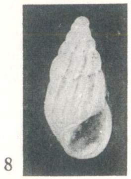 Rissoina (Schwartziella) bouryi Desjardin, 1949