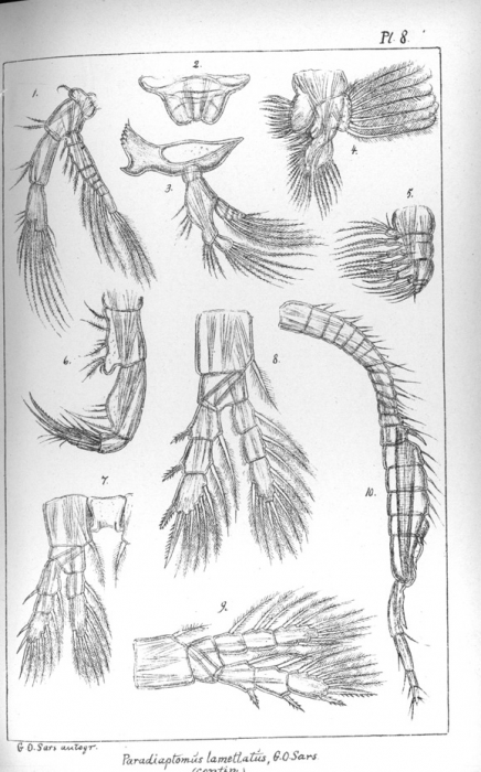 Pl. 8 mouthparts and legs