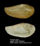 Nuculanidae