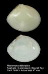 Tellina deltoidalis
