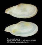 Tonganaella perna