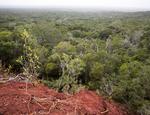 12.02.2014 Arabuko-Sokoke Forest