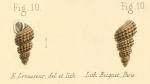 Rissoina granulosa Pease, 1862