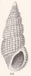 Phosinella pura (Gould, 1861)