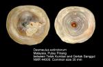 Desmaulus extinctorium