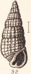 Rissoina cerithiiformis Tryon, 1887