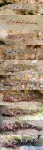 Metamorphosis of juvenile Gobius cruentatus