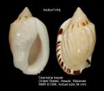 Casmaria kayae