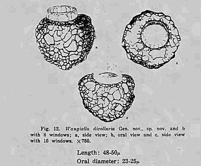 Illustration from Nie 1934