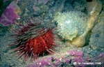 Underwater photos of Antarctic Benthos 1980 - 1990