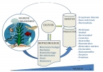 Mariene biotechnologie