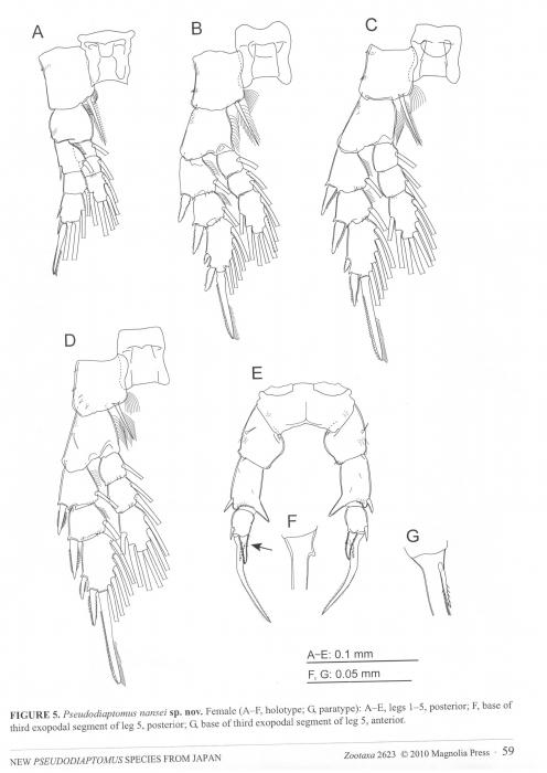 Pseudiaptomus nanseni female P5