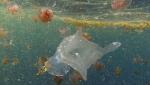 New marine species in 2014