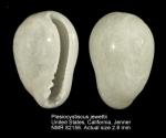 Plesiocystiscus jewettii