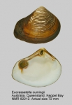 Eucrassatella cumingii