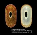 Amblychilepas oblonga